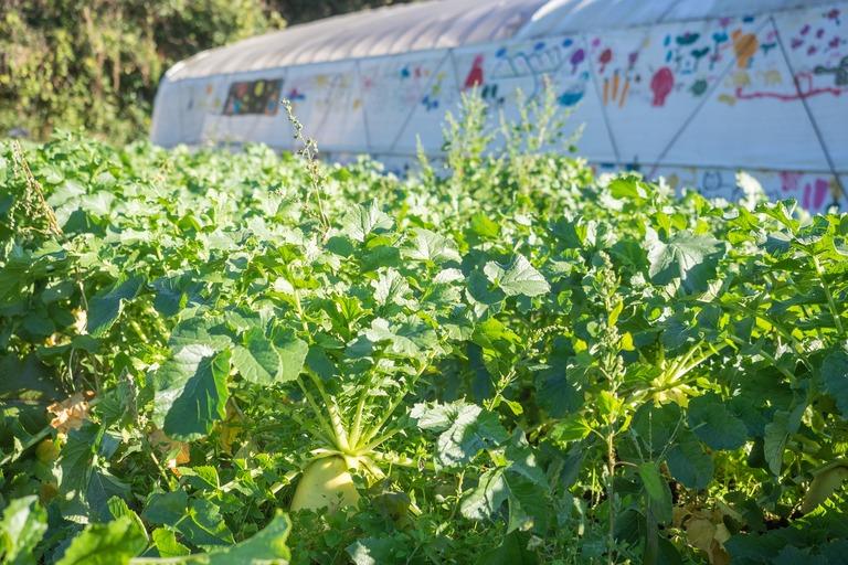 山田農場の一年・十一月|たくあん作り-4