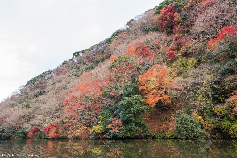君津市亀山湖の紅葉クルーズ20161211-6