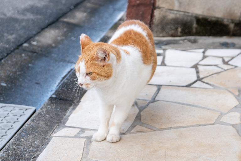 近所の猫_2