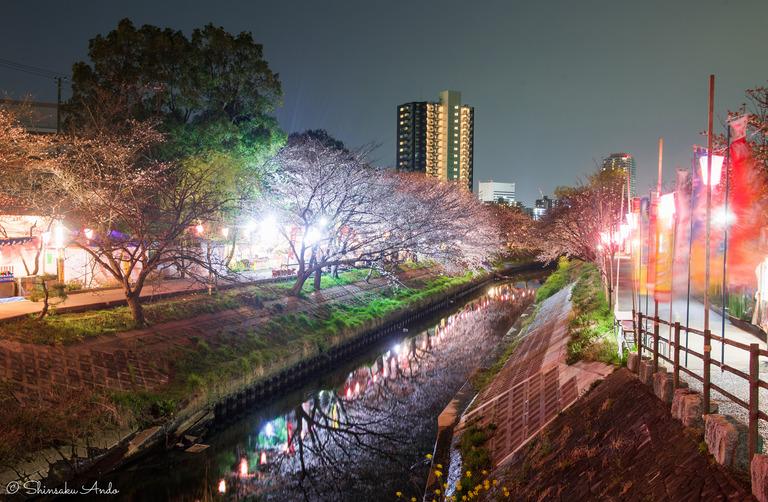 海老川の夜桜でお花見2017-3