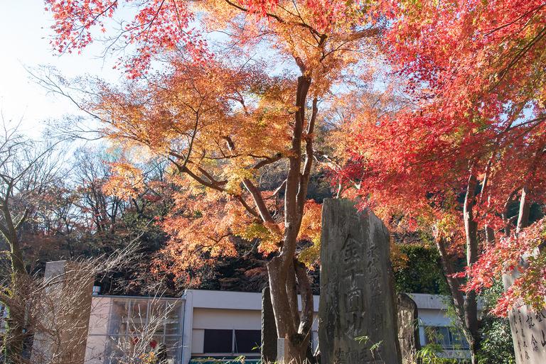 高尾山紅葉ハイキング2020_4