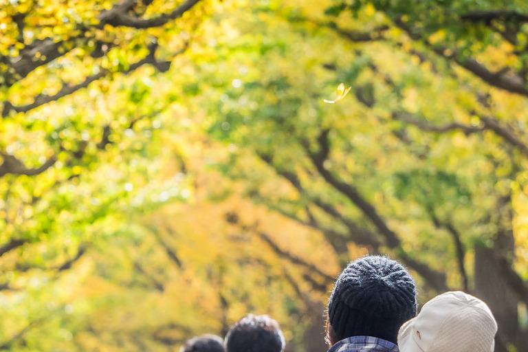 神宮外苑いちょう並木20151121-4