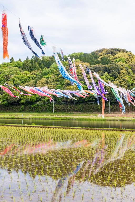 千葉県香取市|いきいき山田・鯉のぼりまつり-9