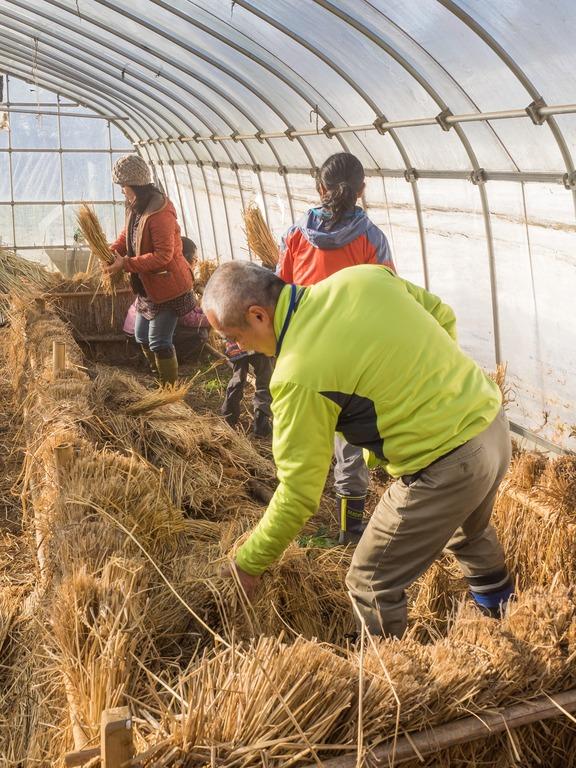 山田農場|踏み込み温床作り-1