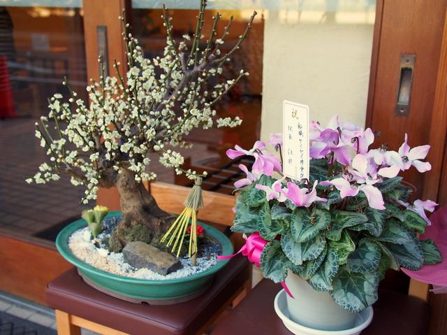 お店の前の花