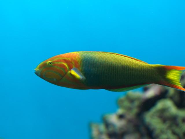 カラフルな魚③