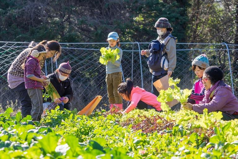 山田農場|冬野菜の収穫-1