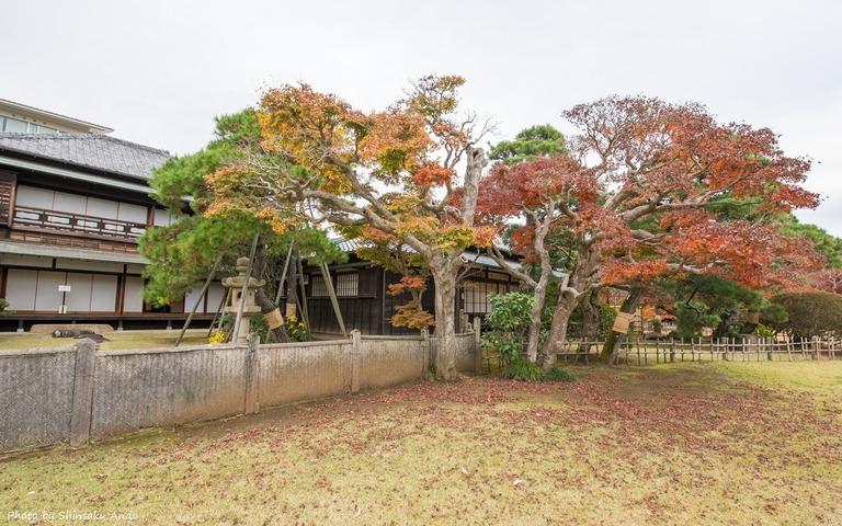 佐倉市城下町あるき-17(旧堀田邸)