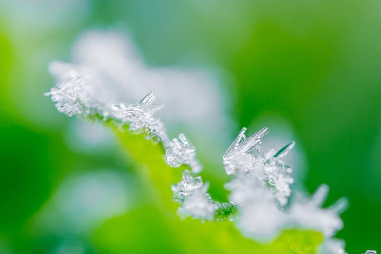 山田農場 冬の朝の畑-5