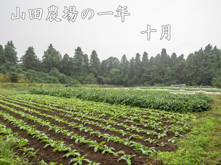 山田農場の一年・十月(枝豆の会)1‐タイトル