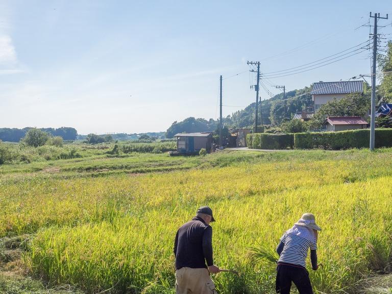 山田農場の一年:9月 稲刈り‐5