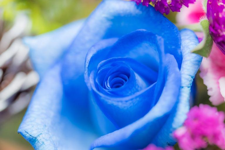 QUEENS FLOWER-3