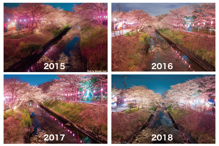 海老川の夜桜2015〜2018