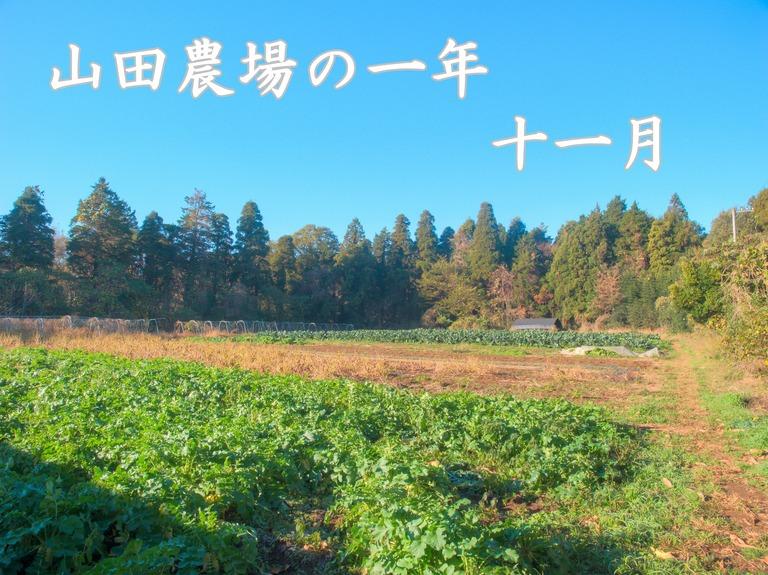 山田農場の一年・十一月|たくあん作り-2