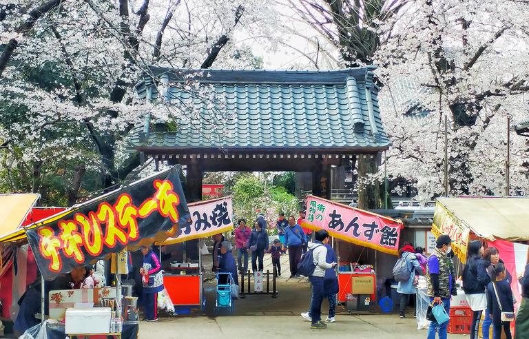 御滝不動尊の桜2019
