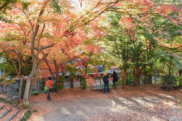 高尾山紅葉ハイキング2020_1