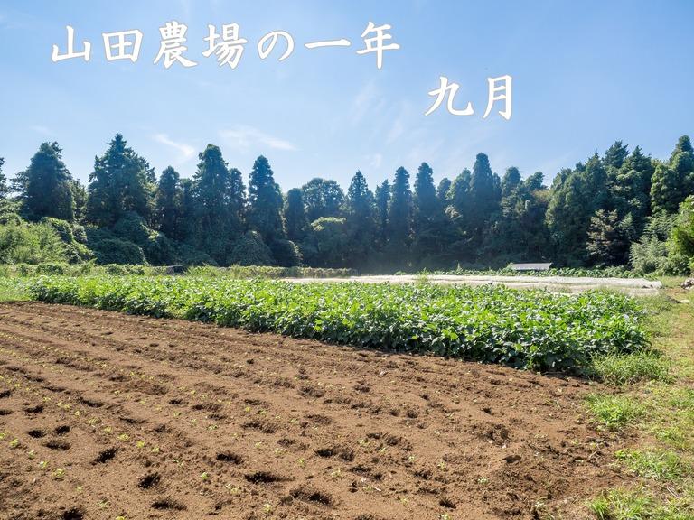 山田農場の一年:9月 稲刈り‐1(タイトル)