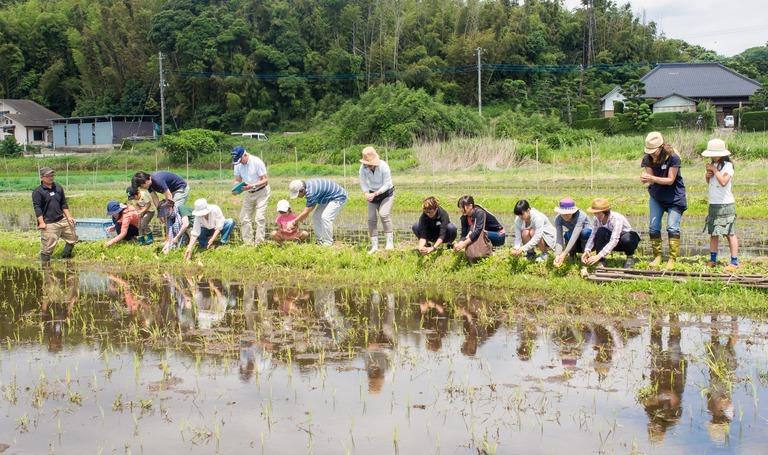 山田農場の一年・六月(参加者の皆さん-5)