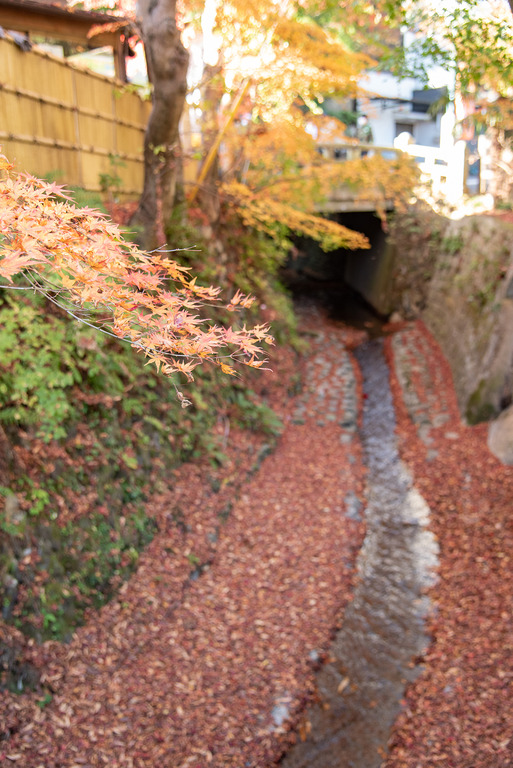 高尾山紅葉ハイキング2020_2