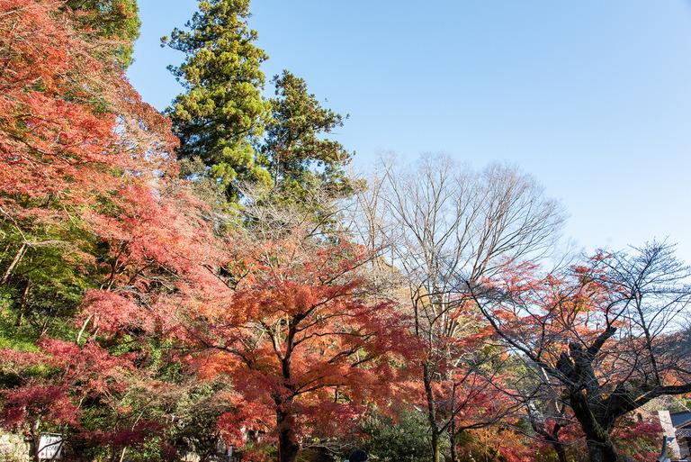 高尾山紅葉ハイキング2020_3