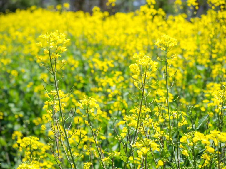 山田農場の4月‐3