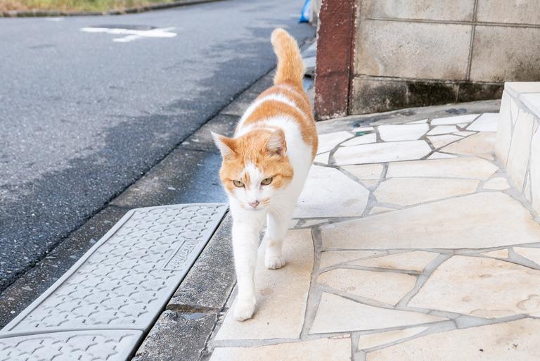 近所の猫_3