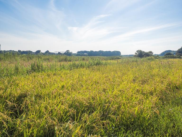 山田農場の一年:9月 稲刈り‐9