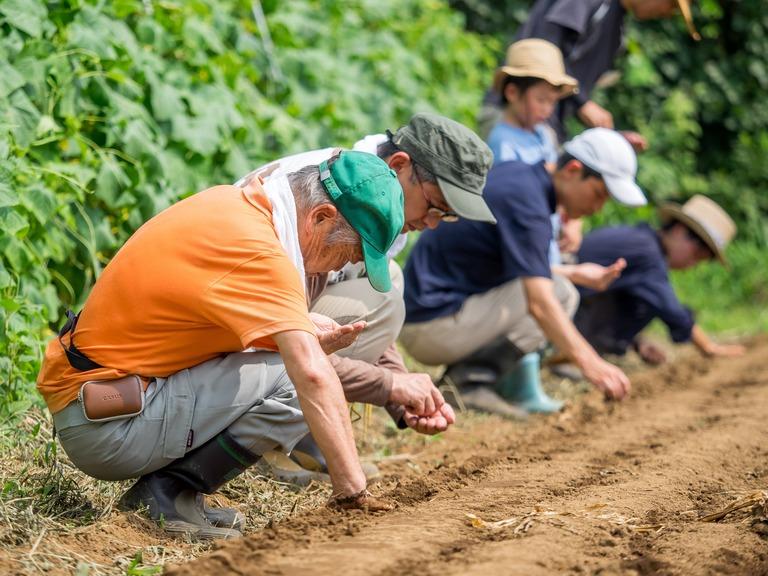 山田農場の一年・八月‐6