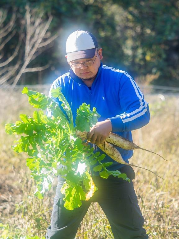 山田農場の一年・十一月|たくあん作り-8