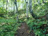 ブナ林散策道