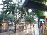 雨のクヒオ通り