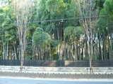 平林寺の林