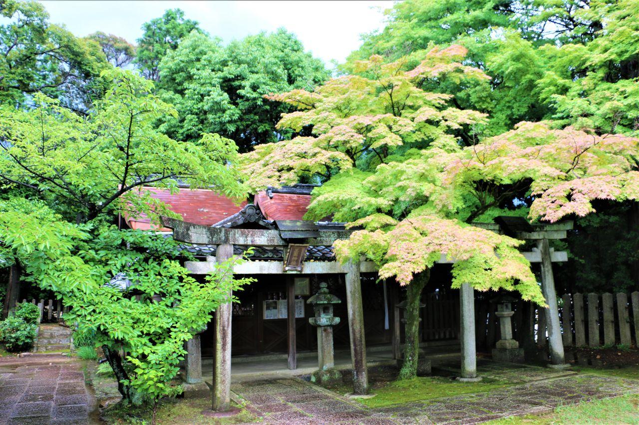 ●新日吉神宮豊国神社IMG_4729