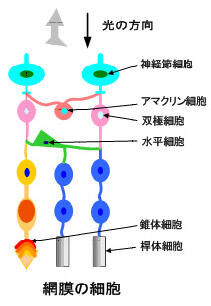 Fig1_2_3_11