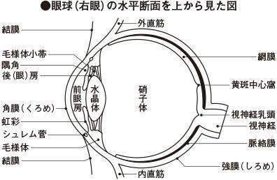 ICS_光_知覚_人間_放射強度_心理実験_2a_new