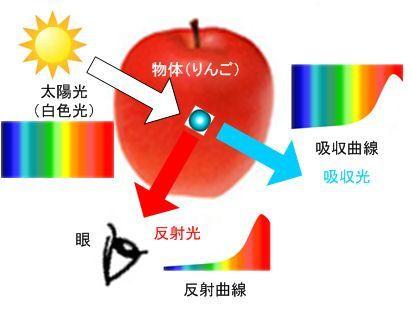 ICS_光_スペクトル_物体色_4_new