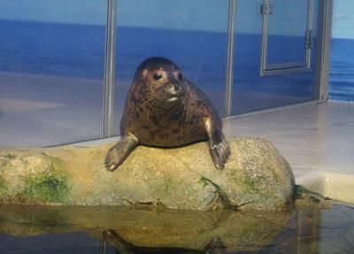 妹ちゃんがプロレスラー-水族館とビルズ05