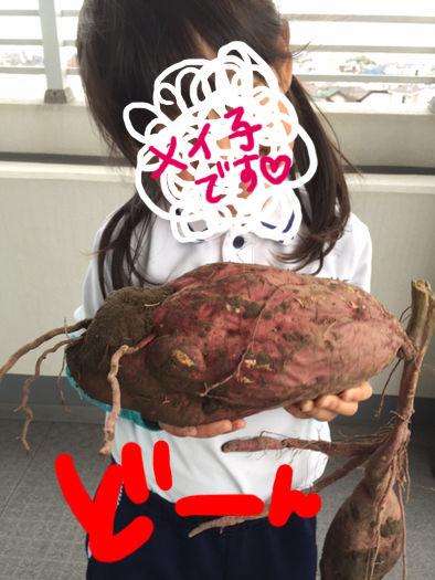 芋掘り02