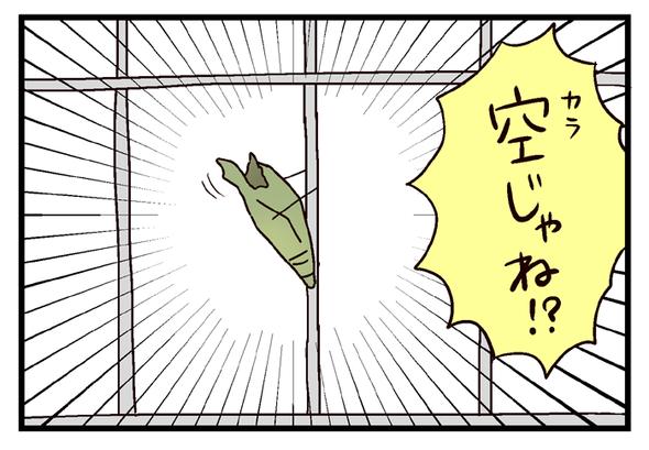 icchomae657_02