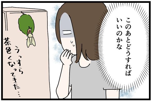 icchomae1271_10
