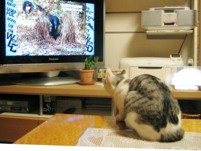 テレビの鳥さんが気になる