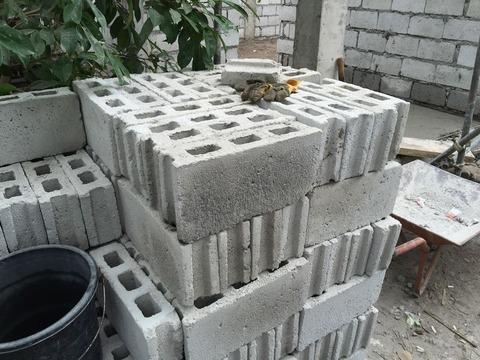 フィリピンで家を建てる (4)