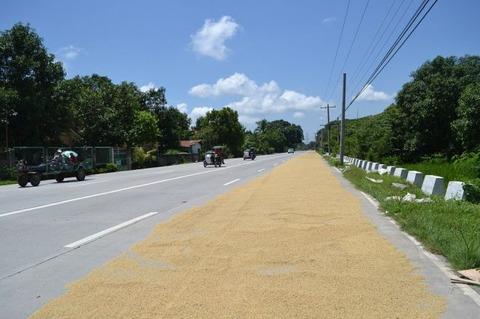 お米の乾燥 (1)