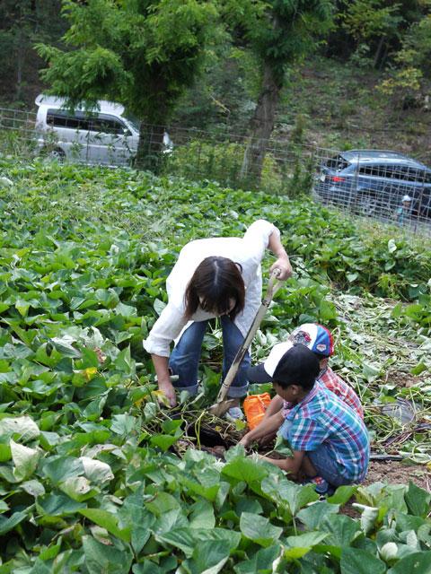フルーツの森平田観光農園芋掘り