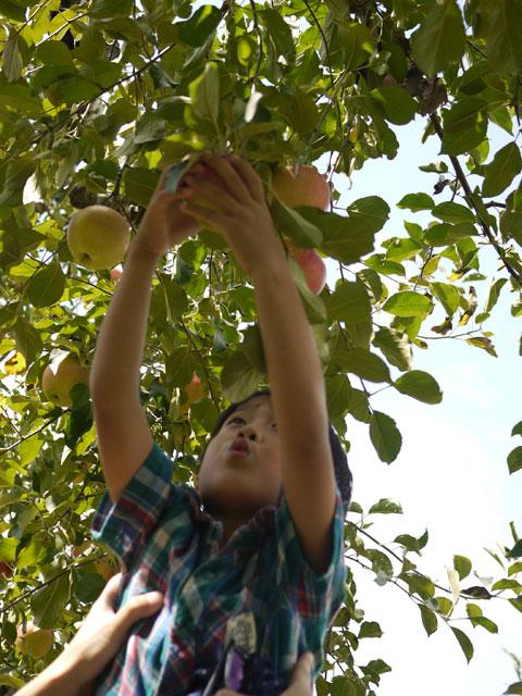 フルーツの森平田観光農園リンゴ狩り
