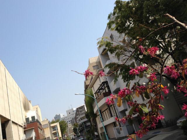 東京青山、天気のいい朝3日目の展示会まわりに向け出発