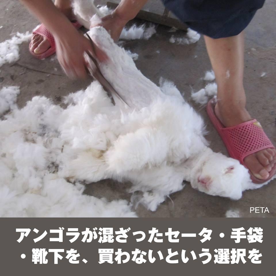 追記&再掲!【拡散希望!】アンゴラ製品を買わないで!殺すより残酷な ...