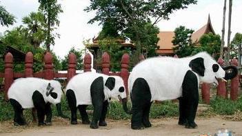 パンダ象−1