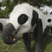 パンダ象−2
