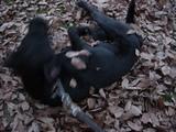 枯れ葉とレイラ